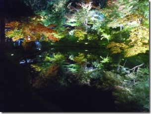高台寺の臥龍池ライトアップ1
