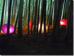 高台寺の竹林ライトアップ2