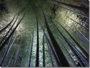 京都の竹林のライトアップ